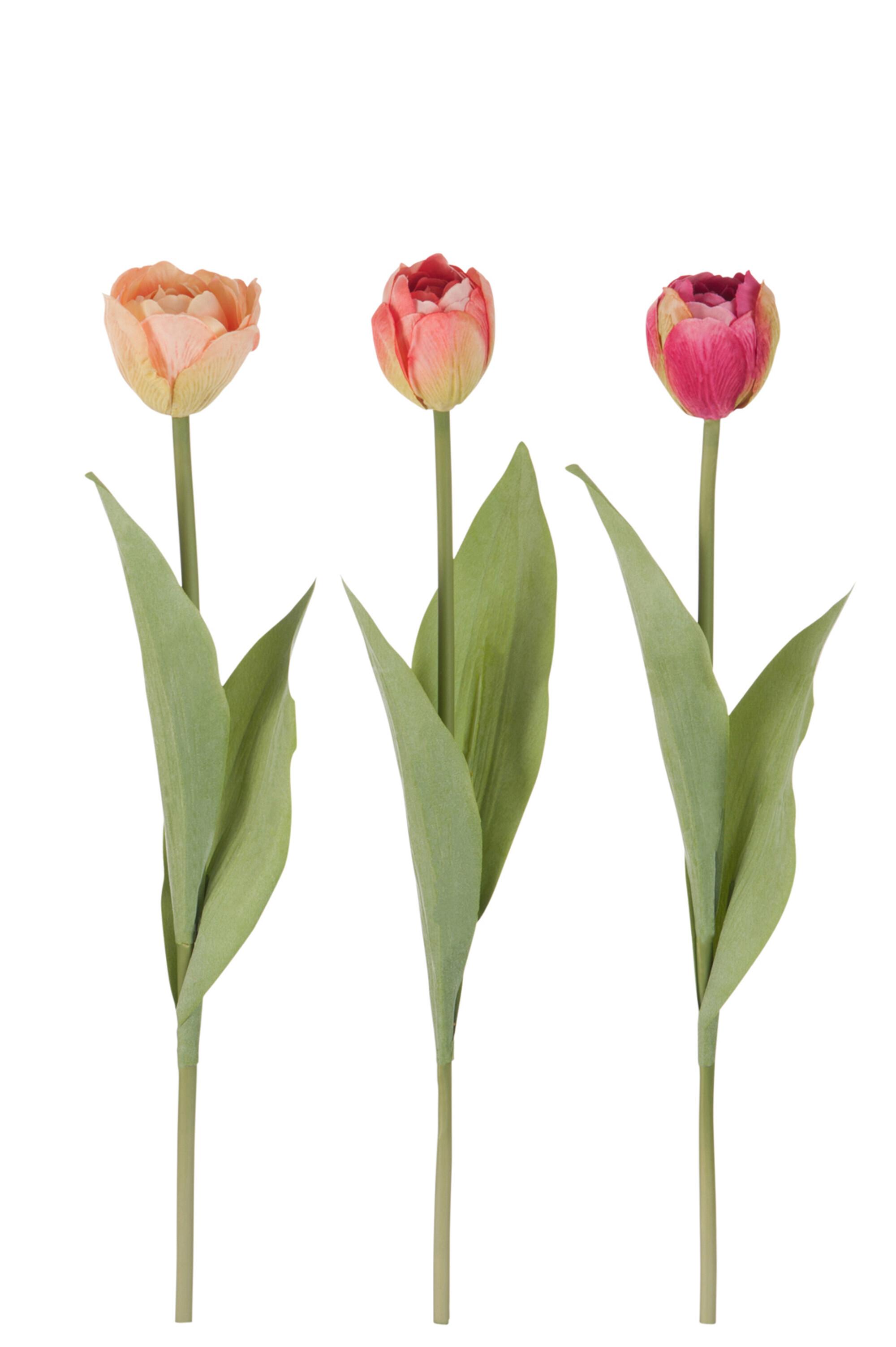 Tři tulipány ORANGE CORAL a PINK