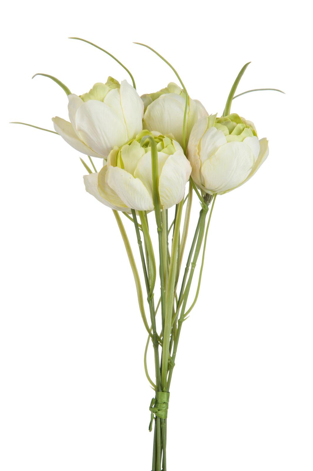 Svazek sedmi tulipánů GREEN