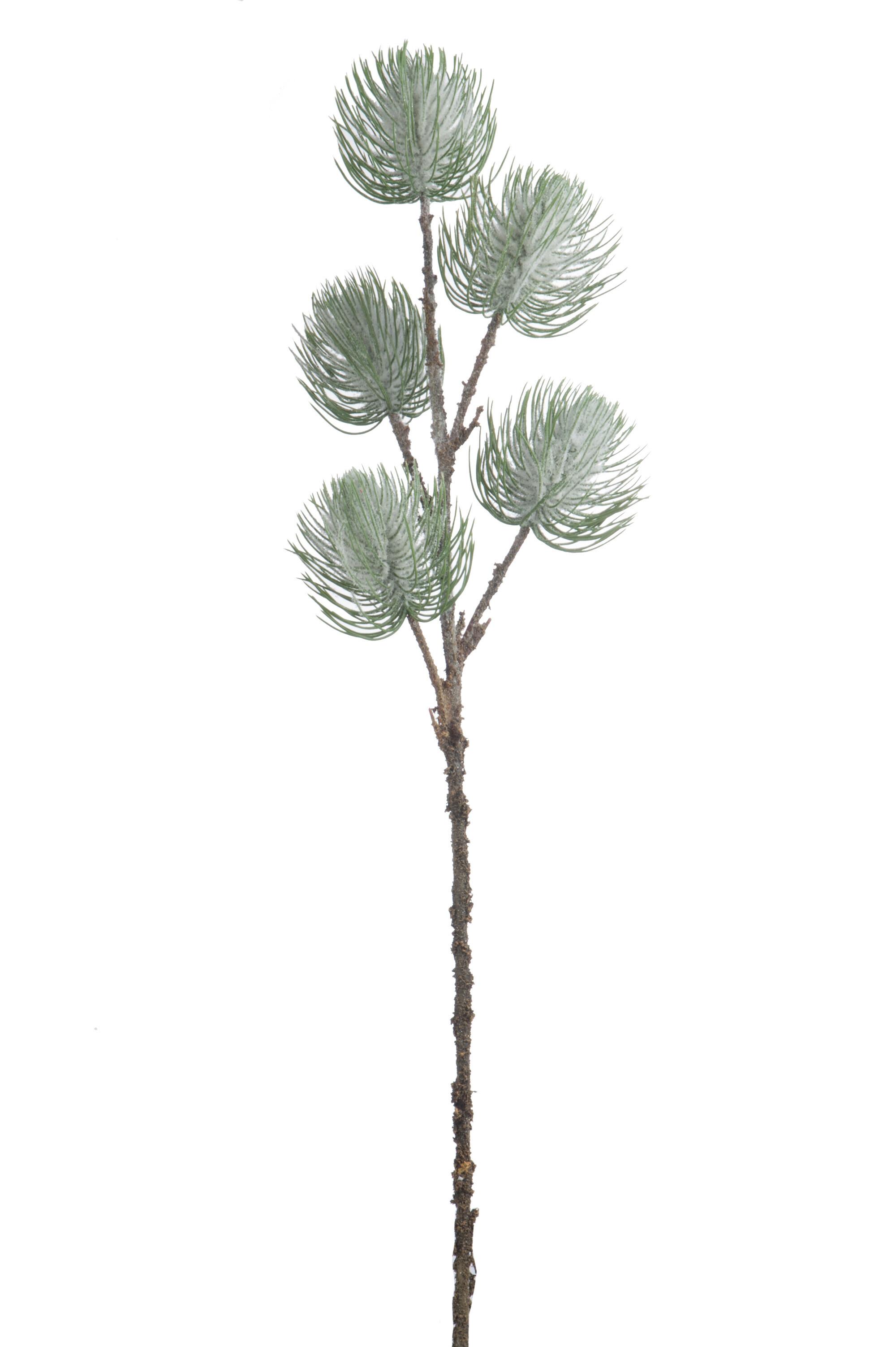 Ojíněná borová větvička