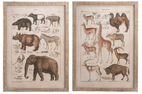 Wall Decoration Animals Antique
